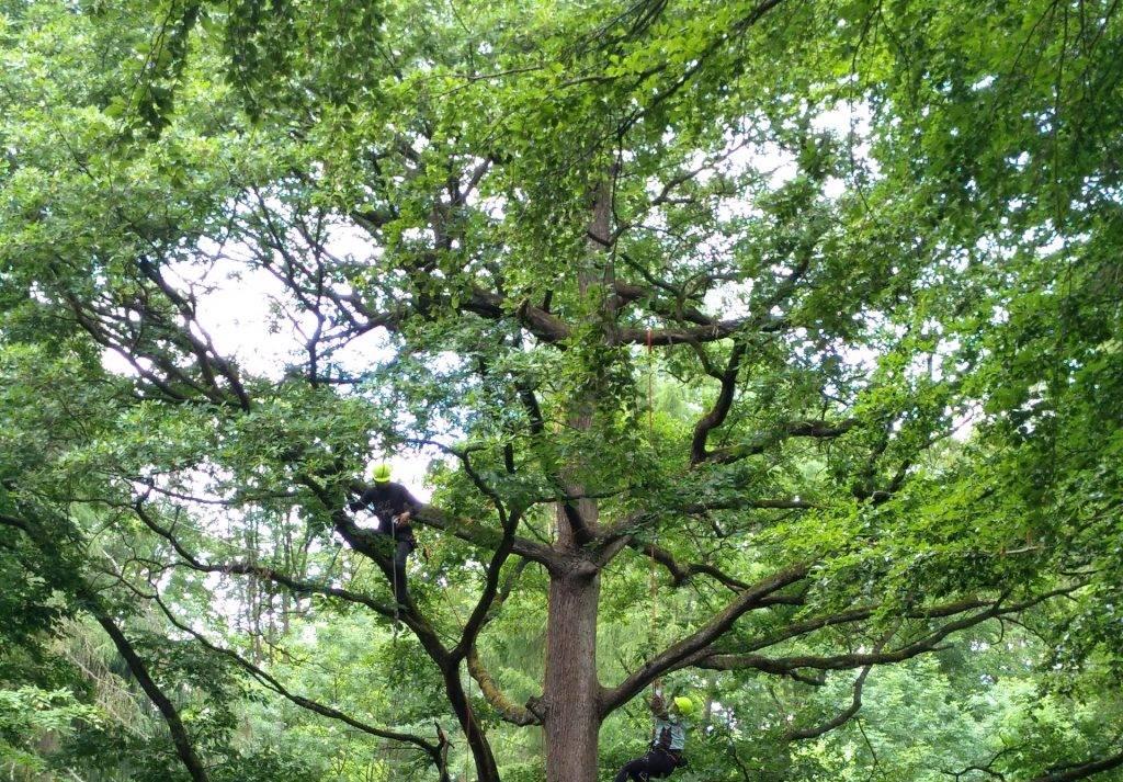Ořez dřevin | Zahrady Laurus